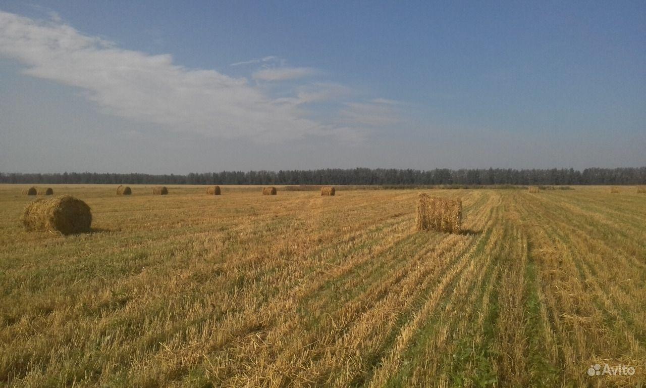 Солома озимой пшеницы