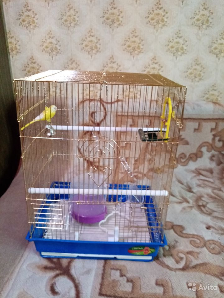Клетка для попугая в Екатеринбурге - фотография № 1