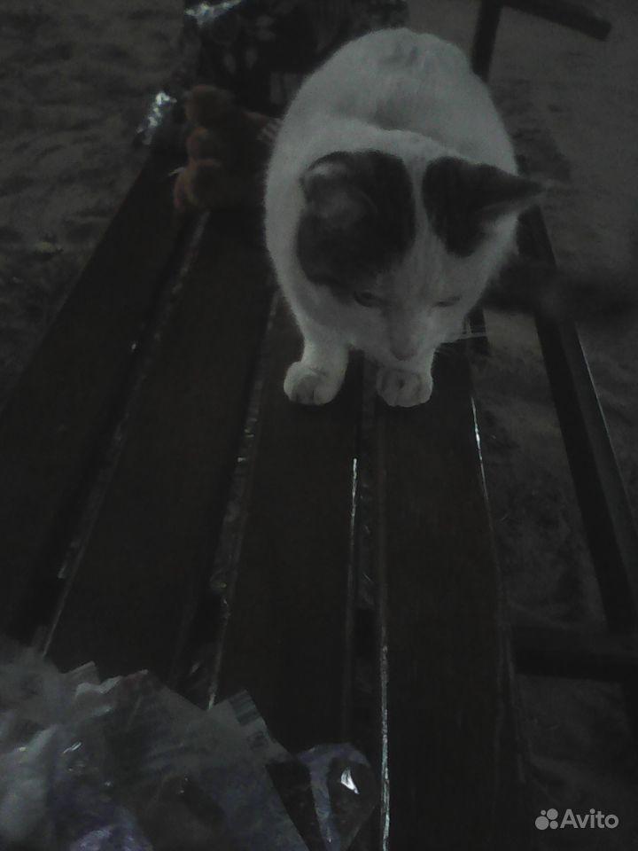 Кот в добрые руки - фотография № 3