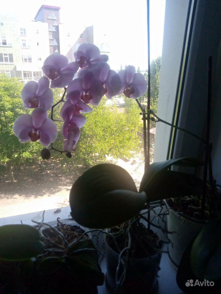 Орхидеи купить на Зозу.ру - фотография № 5