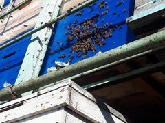 Пчело покеты