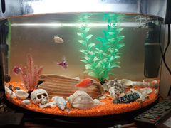 Аквариум+ цветной грунт+ украшение+ рыбки+ корм дл