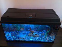 Немецкий аквариум Juwel 110 L Рыбы+декор+фильтр+