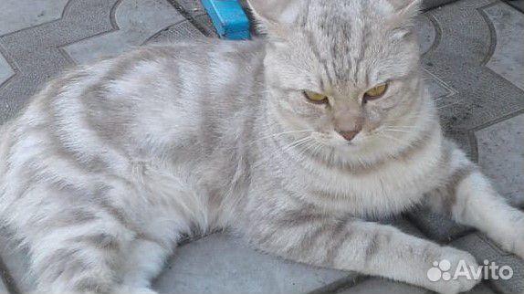 Отдам котенка 89230078502 купить 4