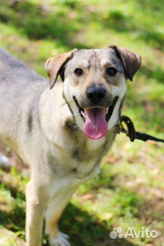 Пес красавчик Грей в добрые руки купить на Зозу.ру - фотография № 3