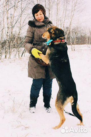 Взрослый пёс из приюта в дар купить на Зозу.ру - фотография № 9