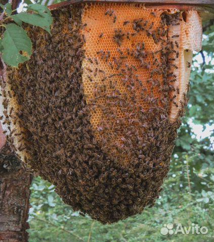 Пчелы в ульях 89620667248 купить 1