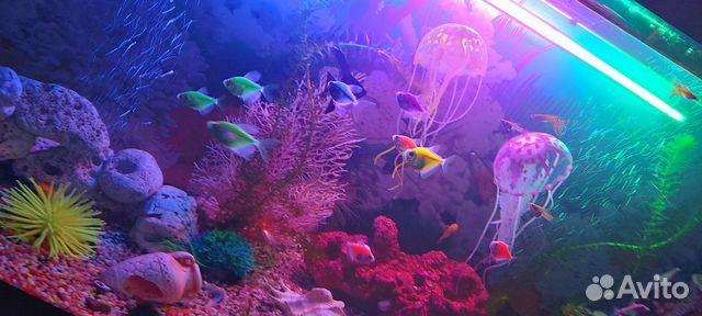 Коралл для аквариума купить 9