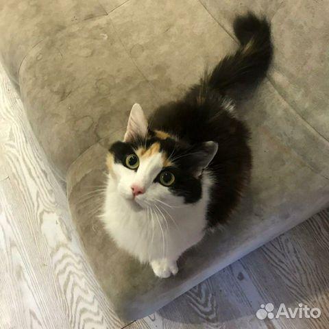 Кошка  89133003379 купить 1