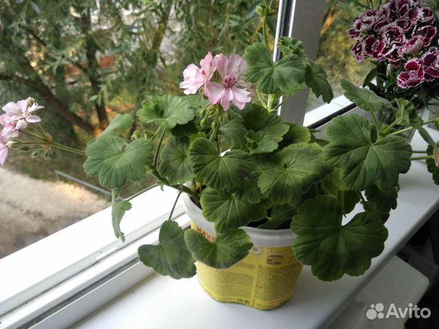 Самые красивые цветы для Вашего дома  купить 9