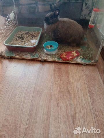 Кролик  купить 2