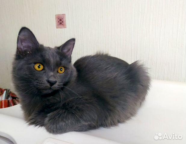 Шикарный серый кот в добрые руки  89038039728 купить 1