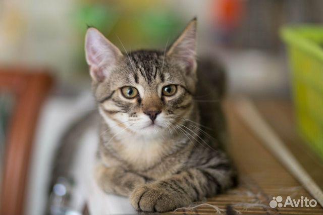 Котенок в добрые руки  89155387202 купить 10