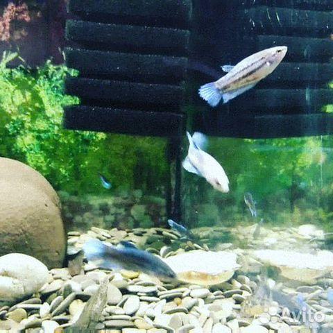 Аквариумные рыбки  89603595956 купить 3