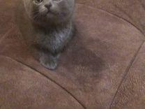 Красивые котята для хороших людей