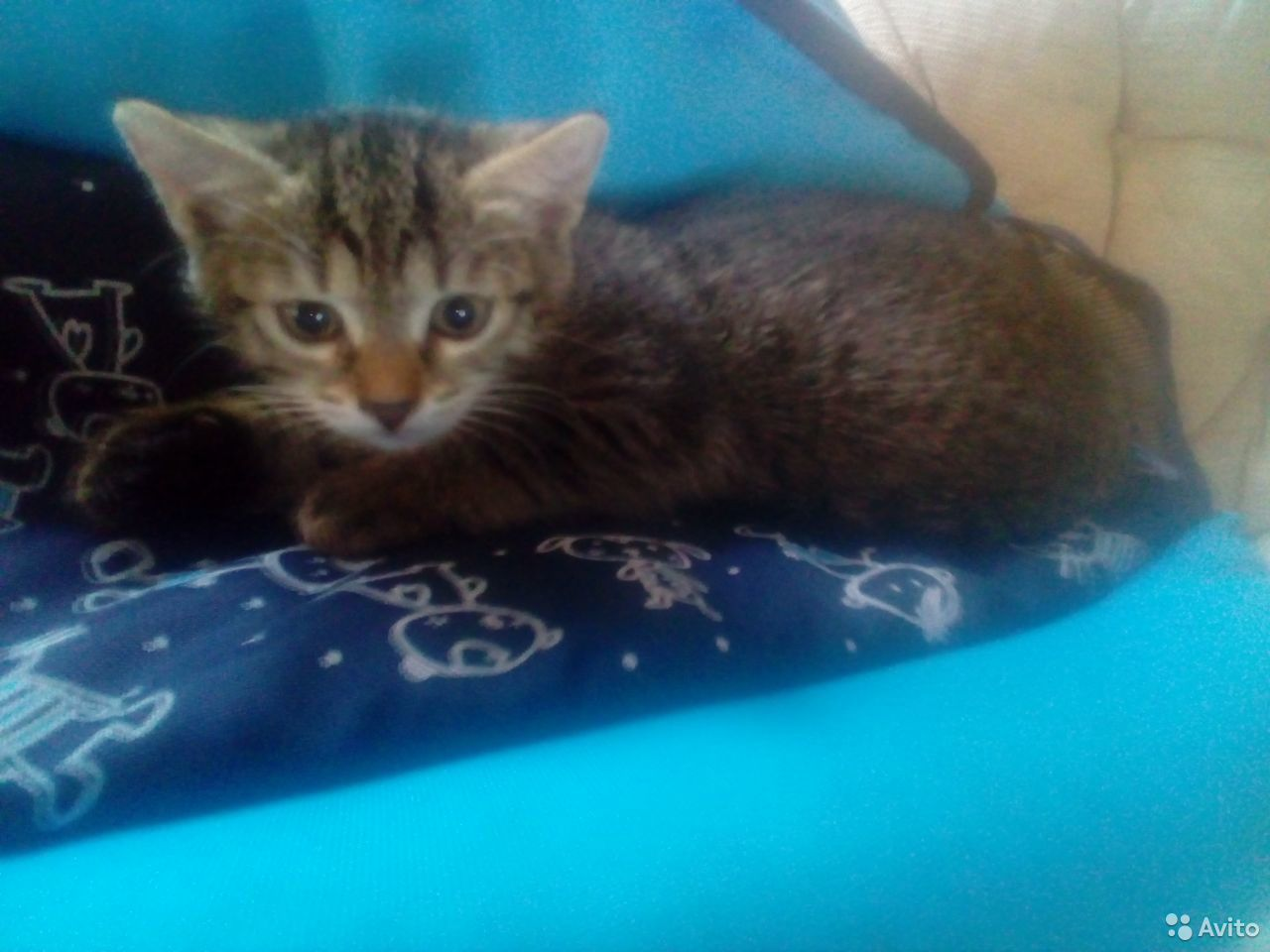 I will give the kittens in good hands  89243738492 buy 4
