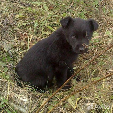 Красивые щенки ищут любящие семьи  89135639765 купить 1