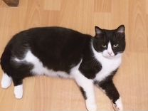 Котик 1 годик