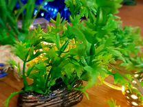 Продаю зелень для аквариума