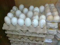 Яйца Индоуток и Гусиное на Инкубацию