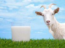 Продаю козье молоко