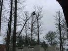 Спил и обрезка деревьев. Расчистка участков