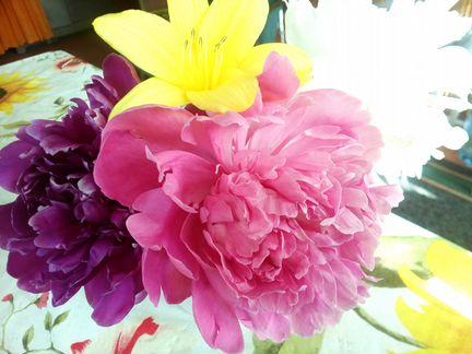Цветы многолетники, огород объявление продам