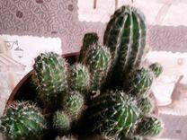 Горшок с кактусами