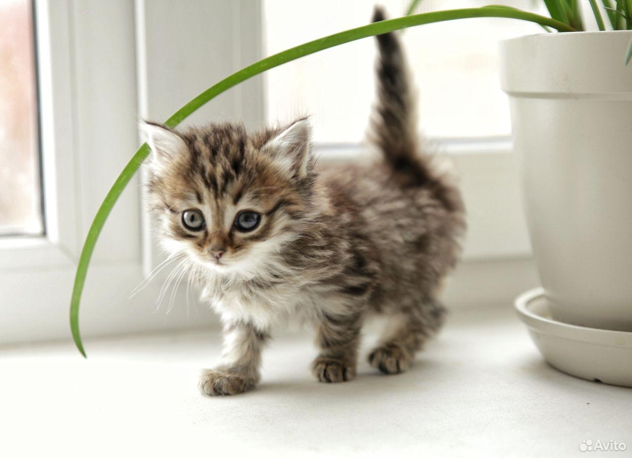 Отдам котят  89129770244 купить 1