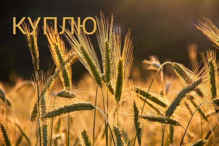 Пшеница,кукуруза, ячмень - Животные - Объявления в Марксе