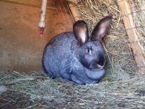 Кролики живьем и мясом